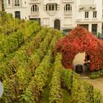 Postales de Paris – Las Vendimias de Montmartre