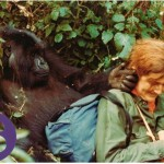 ¿Mujer antes que científica? Notas para analizar el retrato de Dian Fossey (I)
