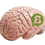 Plasticidad cerebral y género