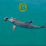 ¿Sueñan las ballenas con jardines de plancton? Algunos apuntes sobre Cultura Animal