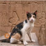 Como perros y gatos: las mascotas en el Antiguo Egipto